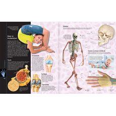 Corpul uman + aplicație gratuită, fig. 2