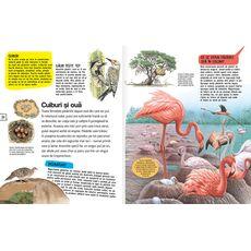 Păsări și mamifere, fig. 3